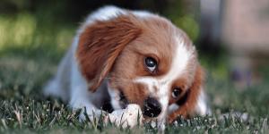 cesped para mascotas preguntas frecuentes - cesped para mascotas 300x150 - Preguntas Frecuentes